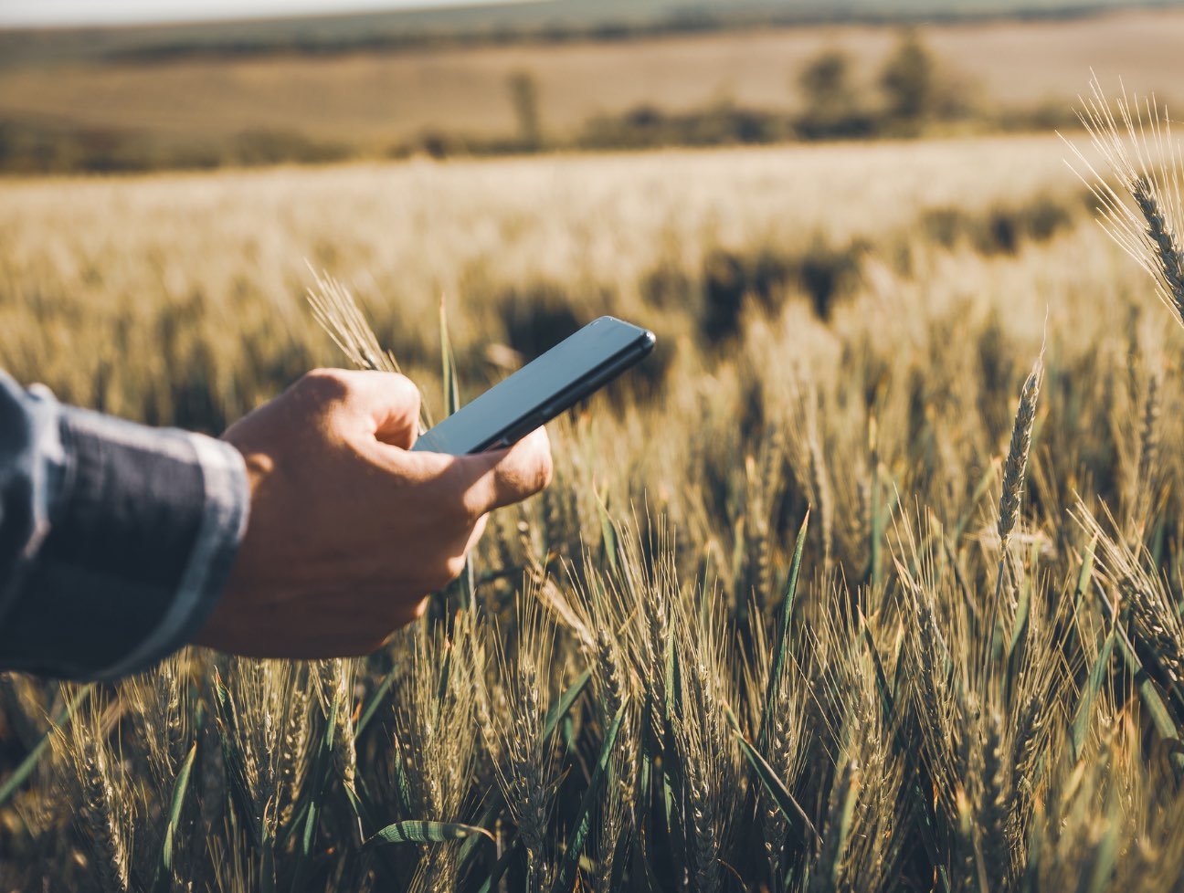 Person holding a cell phone in a field